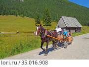 A carriage , the wooden hut, mmeadow. (2017 год). Редакционное фото, фотограф Ignacy Wojciech Pilch / age Fotostock / Фотобанк Лори