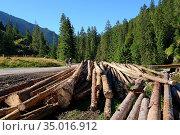 Tree trunks and tourists in the Chocholowska Valley. Стоковое фото, фотограф Ignacy Wojciech Pilch / age Fotostock / Фотобанк Лори