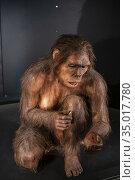 Homo habilis, Museo de la evolución humana, MEH, Burgos , Spain. Редакционное фото, фотограф Tolo Balaguer / age Fotostock / Фотобанк Лори