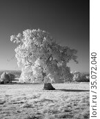 A black and white infrared image of countryside at Wrington, North... Стоковое фото, фотограф Craig Joiner / age Fotostock / Фотобанк Лори