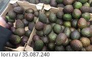Human hand choosing ripe avocado fruits in supermarket stall, close up view. Стоковое видео, видеограф Кекяляйнен Андрей / Фотобанк Лори