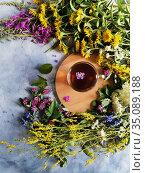 Spiral of forest herbs around a mug of medicinal tea. Стоковое фото, фотограф Мария Сибатрова / Фотобанк Лори