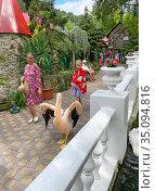 """Розовый пеликан (Pelecanus onocrotalus). Ялтинский зоопарк """"Сказка"""" (2020 год). Редакционное фото, фотограф Мария Кылосова / Фотобанк Лори"""