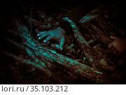 Zombie hands crawling through the creepy thickets of trees, gnarled roots and driftwood in a dark horror forest in a mystical moonlight, apocalypse concept theme. Стоковое фото, фотограф Светлана Евграфова / Фотобанк Лори