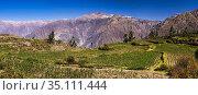 Colca Canyon pre Inca terraces and farmland at Cabanaconde, Peru. Стоковое фото, фотограф Matthew Williams-Ellis / age Fotostock / Фотобанк Лори