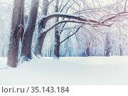 Зимний пейзаж. Зимний лес и заснеженные деревья. Winter landscape, north winter forest with deciduous winter trees covered with frost. Snowy winter nature scene. Стоковое фото, фотограф Зезелина Марина / Фотобанк Лори