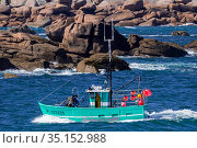 Typical fishing boat from Brittany called caseyeur / fileyeur sailing along the Cote de granit rose / Pink Granite Coast at Ploumanac'h, Perros... Стоковое фото, фотограф Philippe Clement / Nature Picture Library / Фотобанк Лори