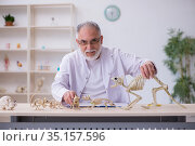 Old male paleontologist examining ancient animals at lab. Стоковое фото, фотограф Elnur / Фотобанк Лори