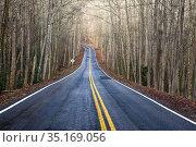 Road through forest - near Poinsett Bridge Heritage Preserve - Travelers... Стоковое фото, фотограф Bill Gozansky / age Fotostock / Фотобанк Лори