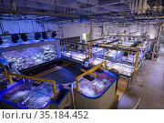 Tanks with Great Barrier Reef experiments at National Sea Simulator... Стоковое фото, фотограф Jurgen Freund / Nature Picture Library / Фотобанк Лори