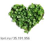 Sprout green plants heart. Стоковое фото, фотограф Иван Михайлов / Фотобанк Лори