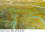 Aerial view of tidal channels in marshland. Mockhorn Island State Wildlife Management Area, Virginia, USA. May 2019. Стоковое фото, фотограф Shane Gross / Nature Picture Library / Фотобанк Лори