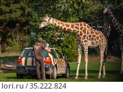 A giraffe and a worker at the Serengeti park zoo in Germany. Редакционное фото, фотограф Restyler Viacheslav / Фотобанк Лори