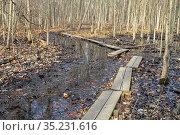 Belleville, Michigan - A boardwalk on a hiking trail through wetlands... Стоковое фото, фотограф Jim West / age Fotostock / Фотобанк Лори