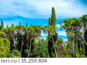 Kiefern und andere Bäume in einem kleinen Wald. Стоковое фото, фотограф Zoonar.com/elxeneize / easy Fotostock / Фотобанк Лори