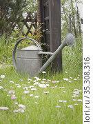 Metal watering can on garden lawn. Стоковое фото, фотограф Dariusz Gora / easy Fotostock / Фотобанк Лори