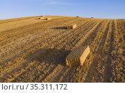 Bales of straw in cornfield after wheat harvest. In the Campiña Cordobesa... Стоковое фото, фотограф Thomas Dressler / age Fotostock / Фотобанк Лори