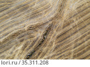 Abstract patterns caused by tractor wheel ruts in cornfield after... Стоковое фото, фотограф Thomas Dressler / age Fotostock / Фотобанк Лори