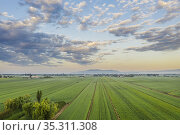 Rice fields (Oryza sativa) in July. Aerial view. Drone shot. Ebro... Стоковое фото, фотограф Thomas Dressler / age Fotostock / Фотобанк Лори