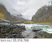 Река Чулышман пасмурным осенним днем. Стоковое фото, фотограф Инна Грязнова / Фотобанк Лори