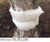 Использование синтепона для изготовления ловчего пояса на дерево. Стоковое фото, фотограф Вячеслав Палес / Фотобанк Лори
