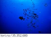 Many small fishes swim deep in the underwater. Стоковое фото, фотограф Сергей Новиков / Фотобанк Лори