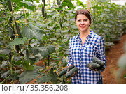Smiling woman horticulturist with harvested cucumbers in hothouse. Стоковое фото, фотограф Яков Филимонов / Фотобанк Лори