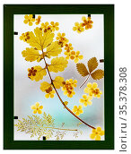 Set of herbarium wild dry pressed flowers and leaves. Стоковое фото, фотограф Zoonar.com/Galyna Andrushko / easy Fotostock / Фотобанк Лори