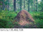 Большой муравейник в лесу. Стоковое фото, фотограф Литвяк Игорь / Фотобанк Лори