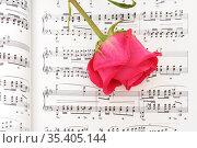 Романс для любимой. Красивая роза на нотах. Стоковое фото, фотограф Валерия Попова / Фотобанк Лори
