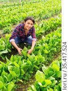 Woman farmer holding green romaine lettuce. Стоковое фото, фотограф Яков Филимонов / Фотобанк Лори