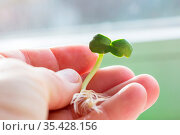 Small Spring sprout in horticultural farm. Concept of a green life... Стоковое фото, фотограф Zoonar.com/Galyna Andrushko / easy Fotostock / Фотобанк Лори