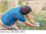 A young woman photographs a wild flower. Стоковое фото, фотограф Владимир Ушаров / Фотобанк Лори