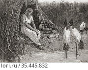 Anysis concealed in the marshes of the delta. Anysis, blind king ... Стоковое фото, фотограф Classic Vision / age Fotostock / Фотобанк Лори