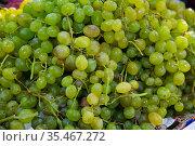 Ripe white grapes in clusters as background. Стоковое фото, фотограф Яков Филимонов / Фотобанк Лори