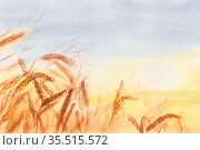 Акварельная иллюстрация. Золотое пшеничное поле на закате. Колоски в лучах восходящего солнца. Сельскохозяйственные зерновые культуры. Красивый спелый колос на фоне поля крупным планом. Мягкий фокус. Watercolor hand painted illustration. Golden wheat field at sunset. Spikelets in the rays of the rising sun. Agricultural grain crop. Beautiful ripe spica on the margin close-up background. Soft focus. Стоковая иллюстрация, иллюстратор Юлия Михайлова / Фотобанк Лори
