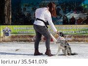 Масленичные гулянья. Собака дает лапу. Редакционное фото, фотограф Петрова Ольга / Фотобанк Лори