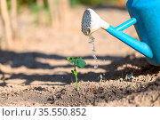 Sprouts watered from a watering can. High quality photo. Стоковое фото, фотограф Zoonar.com/DAVID HERRAEZ CALZADA / easy Fotostock / Фотобанк Лори