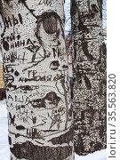 На память. Слова на коре. (2012 год). Редакционное фото, фотограф Петрова Ольга / Фотобанк Лори