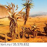 Blur in swaziland mlilwane wildlife nature reserve mountain and tree. Стоковое фото, фотограф Zoonar.com/LKPRO / easy Fotostock / Фотобанк Лори