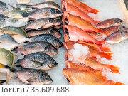 Frischer Fisch zum Verkauf auf einem Markt in London, Großbritannien. Стоковое фото, фотограф Zoonar.com/elxeneize / easy Fotostock / Фотобанк Лори