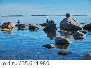 Северные птицы на прибрежных камнях. Стоковое фото, фотограф Дмитрий Грушин / Фотобанк Лори