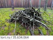Хворост в лесу.. Стоковое фото, фотограф Анатолий Матвейчук / Фотобанк Лори