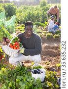 Portrait of a African american man in a vegetable garden with a basket of crops. Стоковое фото, фотограф Яков Филимонов / Фотобанк Лори