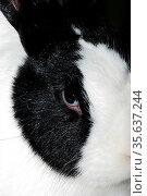 Kleiner hase mit schwarzen flecken schaut in die kamera. Стоковое фото, фотограф Zoonar.com/thomas eder / age Fotostock / Фотобанк Лори
