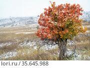Snow blizzard and fall colors at Colorado foothills, Horsetooth Mountain... Стоковое фото, фотограф Zoonar.com/Marek Uliasz / easy Fotostock / Фотобанк Лори