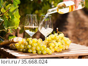 glass of White wine ripe grapes and bread on table in vineyard. Стоковое фото, фотограф Татьяна Яцевич / Фотобанк Лори