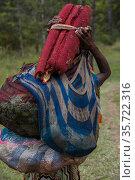 Dani tribe woman carrying Pandanus palm fruit. Budaya village, Suroba, Trikora Mountains, West Papua, Indonesia. March 2018. Стоковое фото, фотограф Pete Oxford / Nature Picture Library / Фотобанк Лори