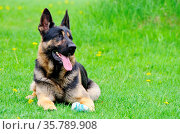 ZON-4678413. Стоковое фото, фотограф Zoonar.com/Kerstin Hennig / age Fotostock / Фотобанк Лори