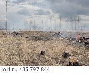 Спиленный лес после сжигания порубочных остатков. Стоковое фото, фотограф Бабкина Марина / Фотобанк Лори